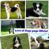 Club per cani: Love of Dogs
