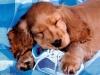 Club per cani: Piccoli_amici