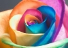 Club per cani: Villé des fleur