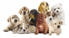 Club per cani: Dogs Paradise