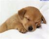 Club per cani: LoveDOG4