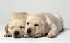 Club per cani: Puppy-Resort