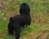 Club per cani: Il mulino della prateria