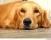 Club per cani: Zampettiamo!