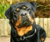 Club per cani: Love dogs