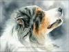 auranna - allevatore di cani Dogzer