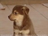 valeria2002 - allevatore di cani Dogzer