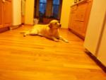 MAGGIE - Cerbero cane leggendario (8 anni)