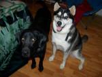 Bandit and max - Dobermann - Rottweiler Maschio