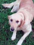 sheila - Otterhound (7 anni)