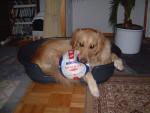 Rixie - Hovawart (9 mesi)