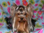 VAN ESKAÏA du TEMPLE DES 7 MERVEILLES - Kai dog