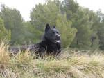 Ours (kaï) - Kai dog