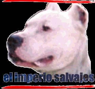 Dogo - Dogo argentino