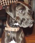 Cara - Cane da ferma tedesco (6 anni)
