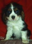 Skye - King Charles (9 mesi)