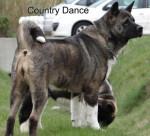 Country Dance du Territoire des Ours - Akita americano