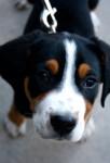 Max - Maschio (4 mesi)