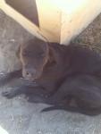 zippo - Maschio (3 anni)