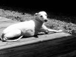 Sissy - (12 anni)