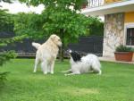 Hubert e Kody - Maschio