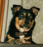 Nicky - Maschio (3 anni)