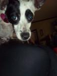 Jasmin - (1 anno)