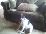 Lucy - (5 anni)