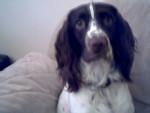 Milo - Maschio (2 anni)