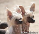 Lady Adaezea et Lady Arousha - Pays Bas DCL - Cane nudo cinese