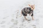Foto Cane nudo cinese