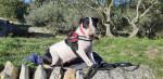 pipa - Bull terrier Maschio (6 anni 1 mese)