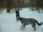 syntaxe, mon irish wolfhuond - LEVRIER IRLANDAIS - Levriero Irlandese