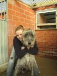 Roy... Irish Wolfhound - Levriero Irlandese