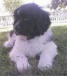 Bepper - Lupo (11 mesi)