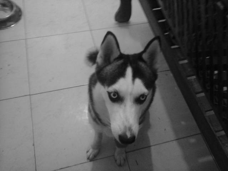 zacha - Lupo (5 anni)