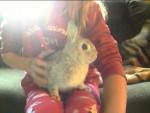 Coniglio Bunny Bieber - Maschio ( (1 anno))