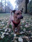 Thay - Maschio (11 mesi)