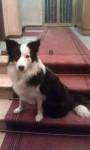 Split - Maschio (1 anno)