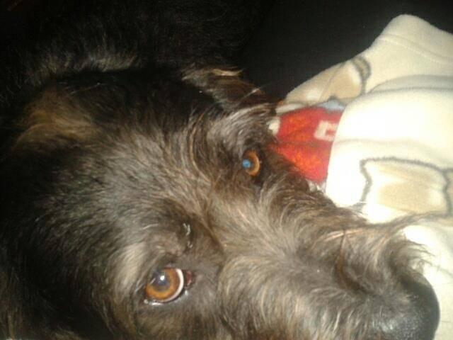 Black - Maschio (3 anni)