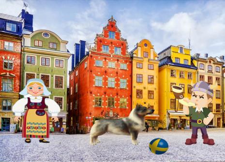 Il Västgötaspetsarriva dalla Svezia fino a noi: adottatelo!