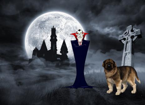 Nell'occasione del mese della Romania, adottare un Cane Pastore dei Carpazi!